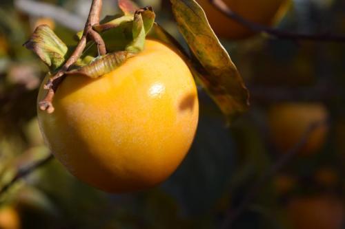 I frutti dell'autunno