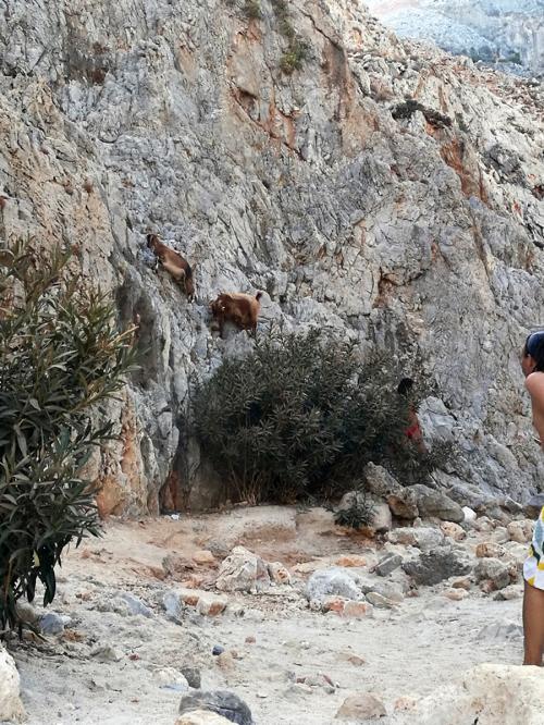 Creta 12