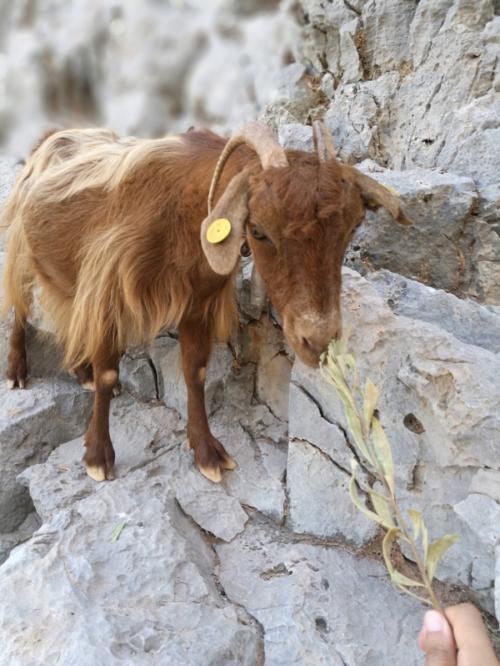 Creta 13